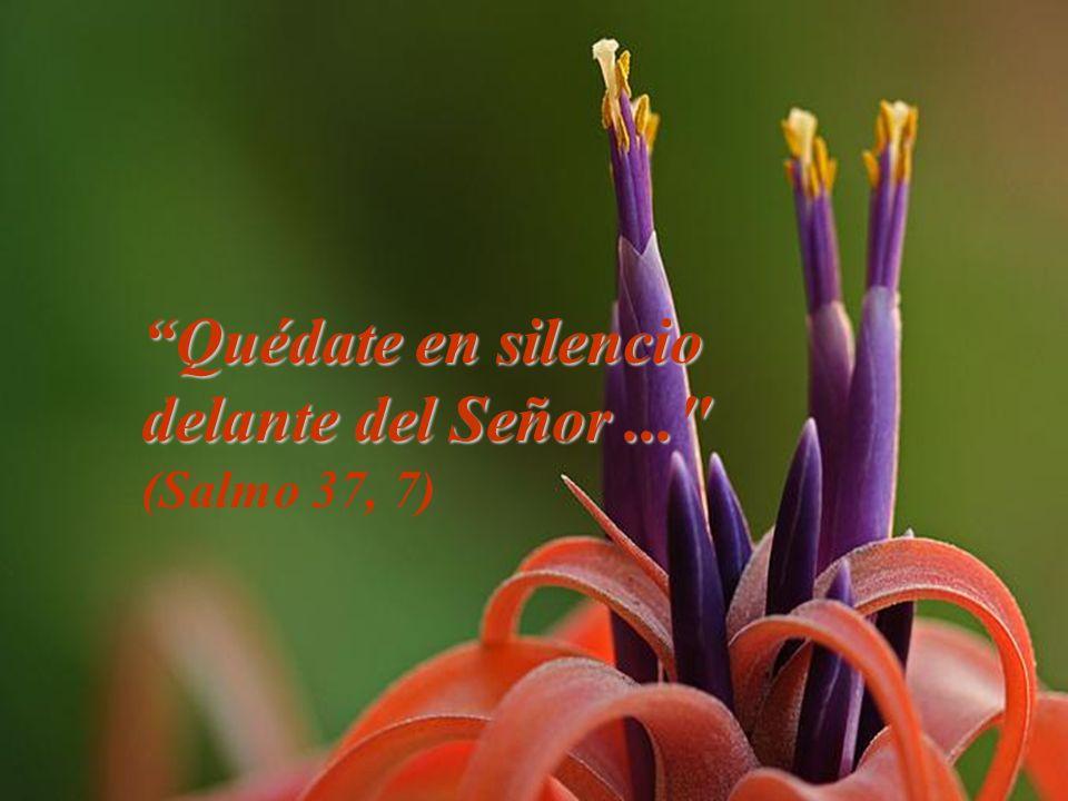 Quédate en silencio delante del Señor ... (Salmo 37, 7)