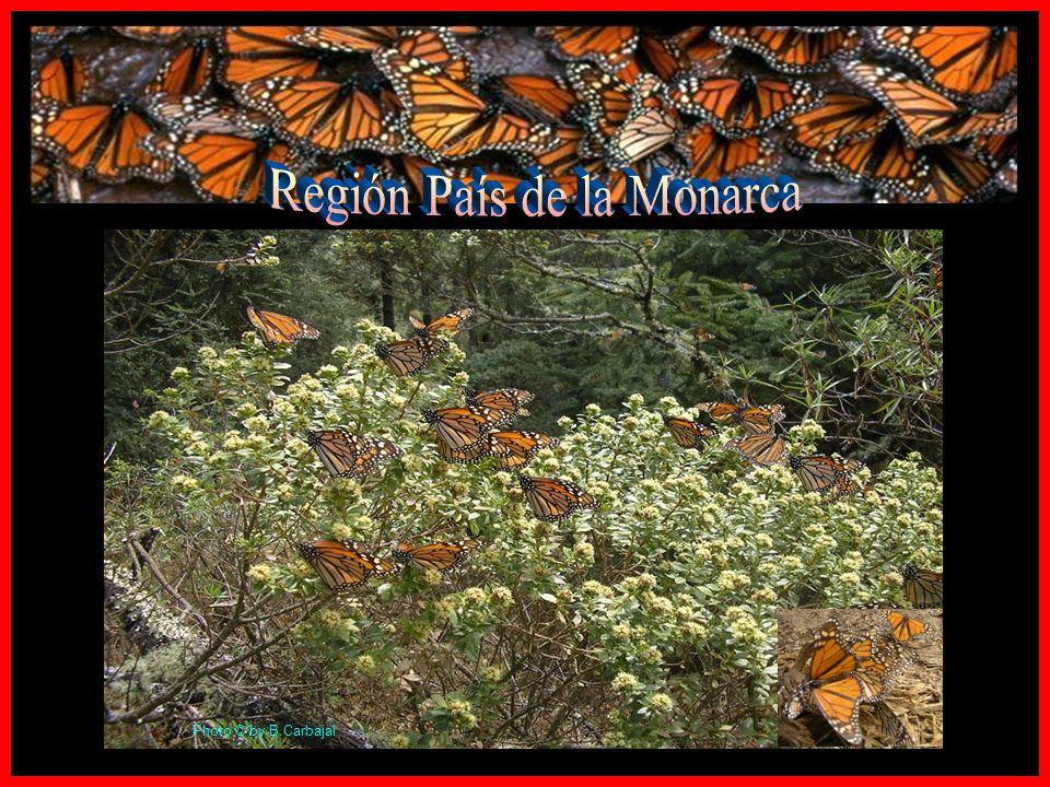 Región País de la Monarca