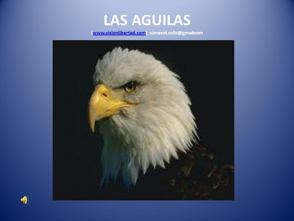 LAS AGUILAS (www.visionlibertad.com) ximesol.soliz@gmailcom