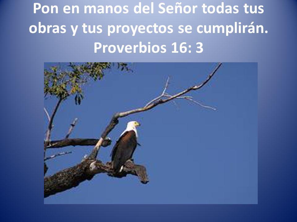 Pon en manos del Señor todas tus obras y tus proyectos se cumplirán