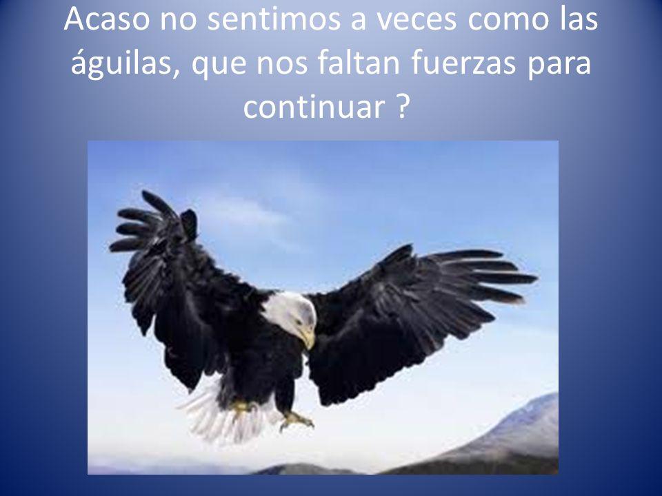 Acaso no sentimos a veces como las águilas, que nos faltan fuerzas para continuar