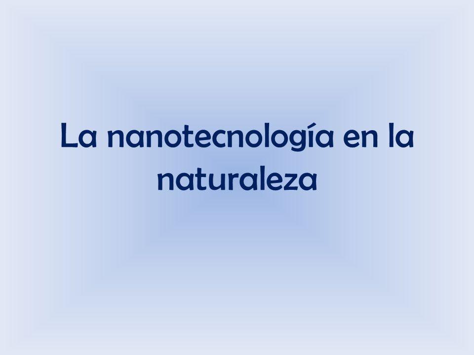 La nanotecnología en la naturaleza