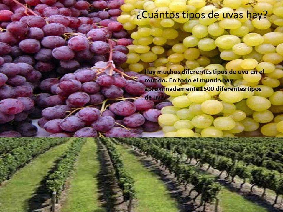 Las uvas anna stanley ppt video online descargar for Cuantos tipos de arboles hay en el mundo