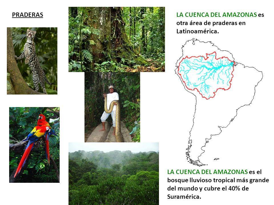 PRADERAS LA CUENCA DEL AMAZONAS es otra área de praderas en Latinoamérica.