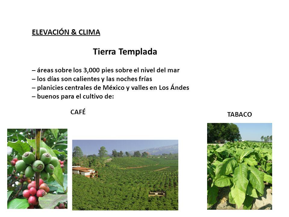 Tierra Templada ELEVACIÓN & CLIMA