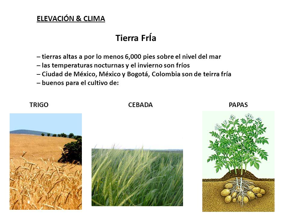 Tierra FrÍa ELEVACIÓN & CLIMA