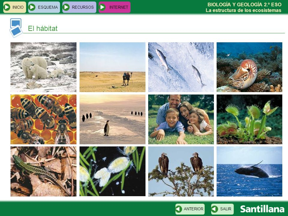 INICIO ESQUEMA RECURSOS INTERNET El hábitat ANTERIOR SALIR