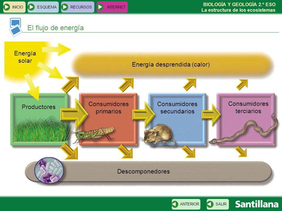 El flujo de energía Energía solar Energía desprendida (calor)