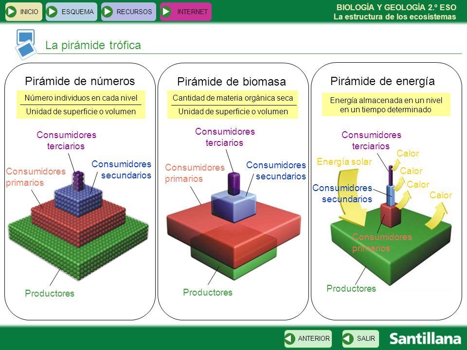 La pirámide trófica Pirámide de números Pirámide de biomasa