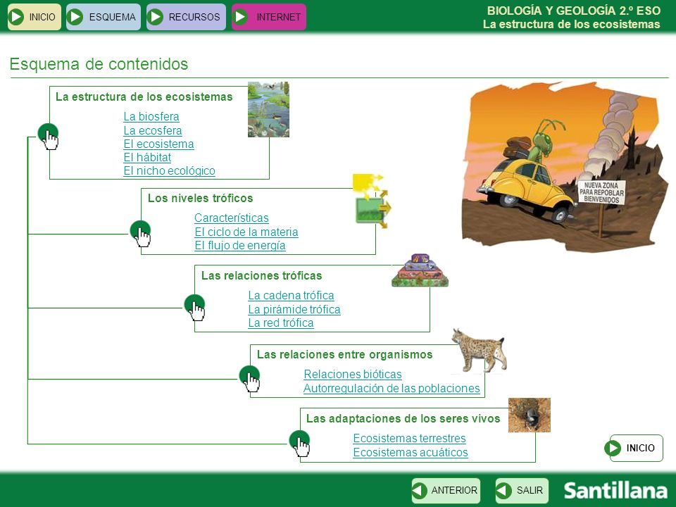 Esquema de contenidos La estructura de los ecosistemas La biosfera
