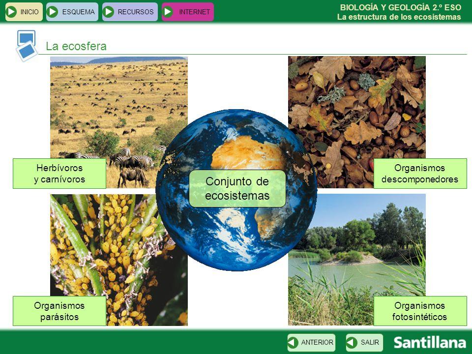 Conjunto de ecosistemas