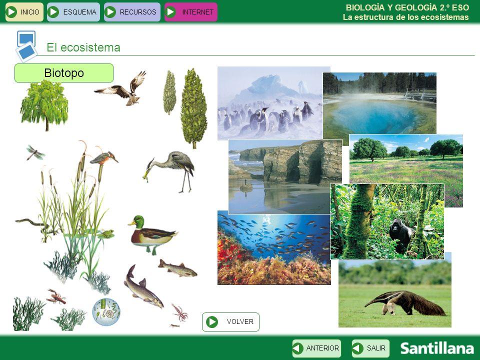 El ecosistema Biotopo INICIO ESQUEMA RECURSOS INTERNET VOLVER ANTERIOR