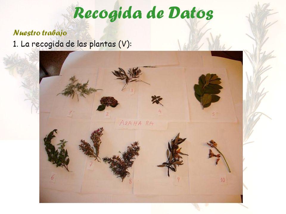 Recogida de Datos Nuestro trabajo 1. La recogida de las plantas (V):