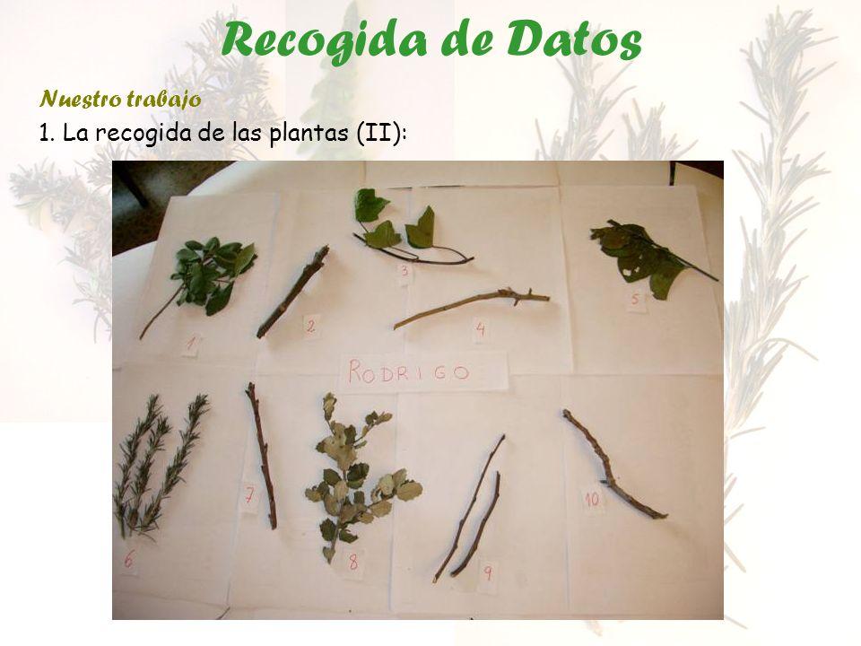 Recogida de Datos Nuestro trabajo 1. La recogida de las plantas (II):
