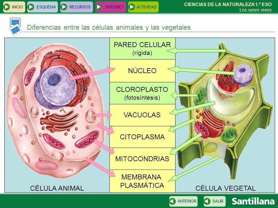 Diferencias entre las células animales y las vegetales