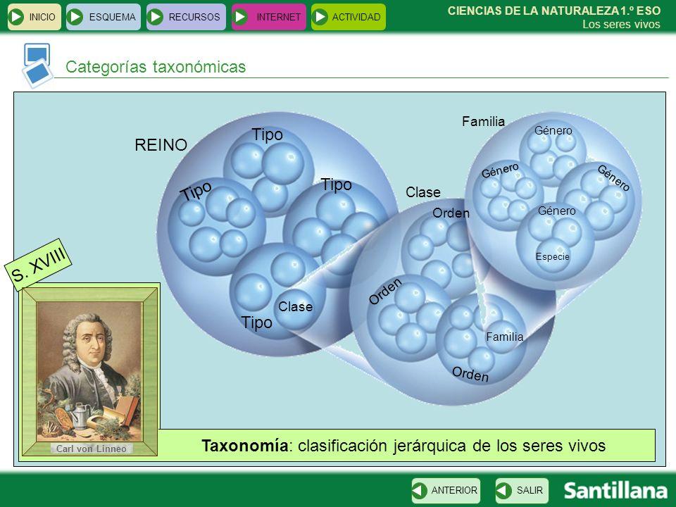 Taxonomía: clasificación jerárquica de los seres vivos