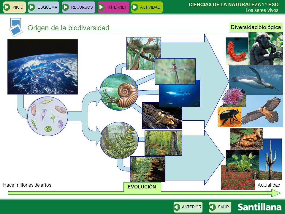 Origen de la biodiversidad