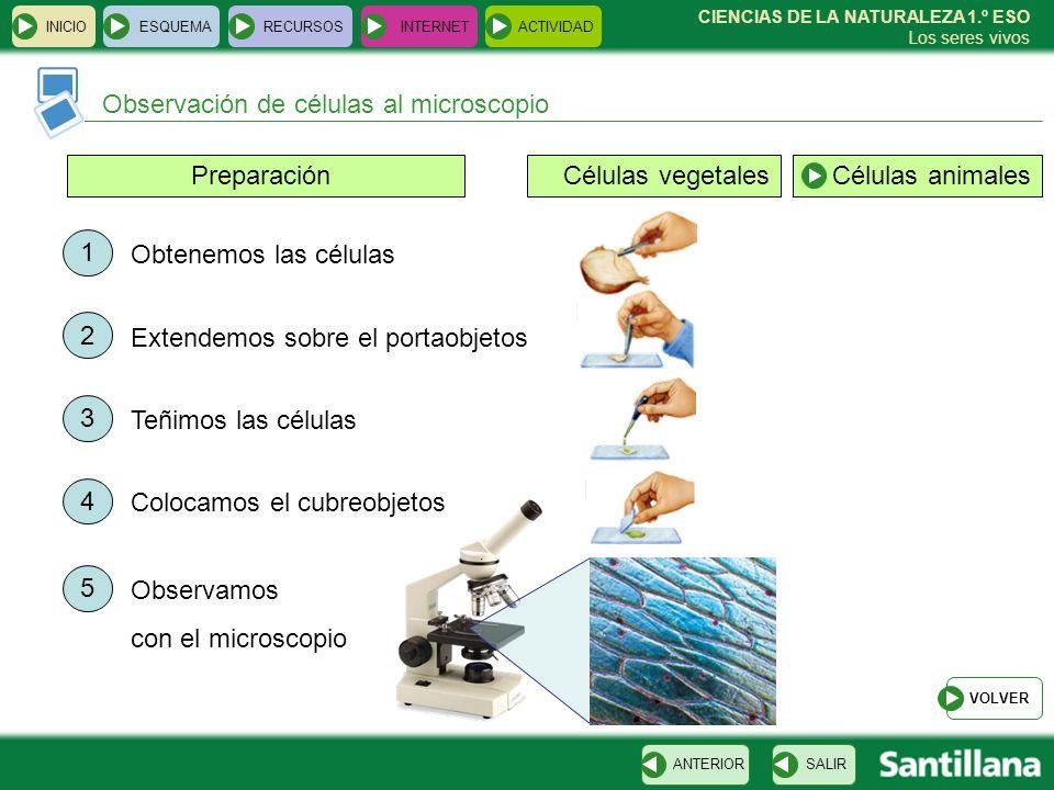 Observación de células al microscopio