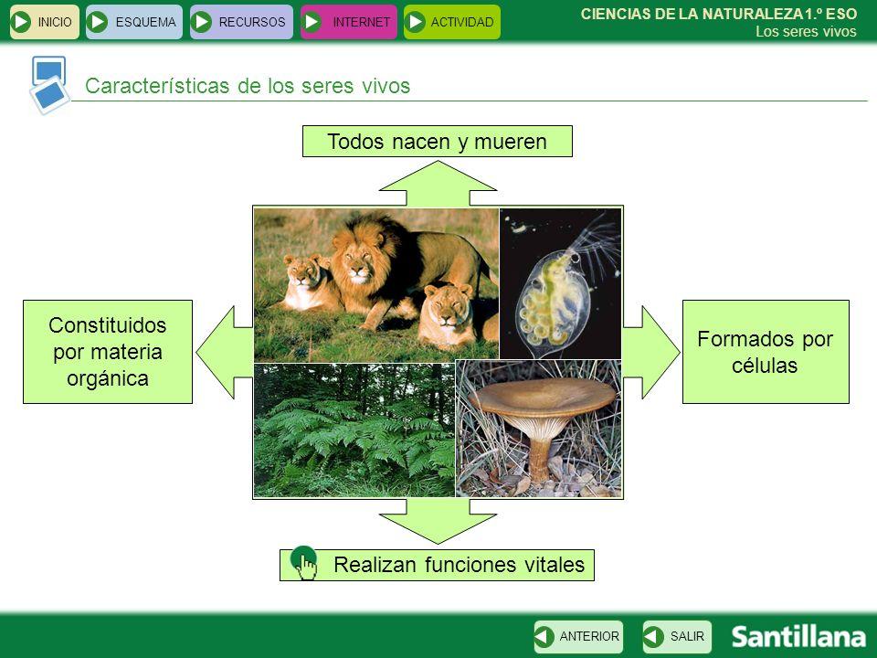 Constituidos por materia orgánica