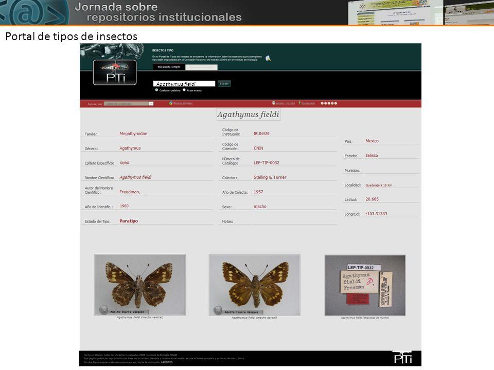 Portal de tipos de insectos