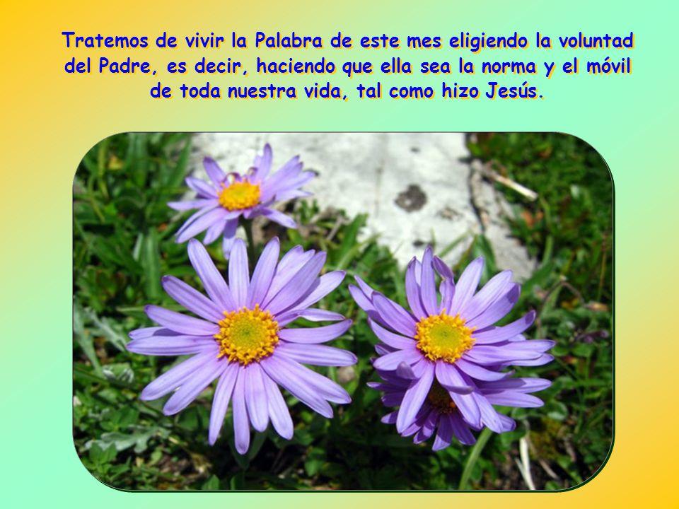 Tratemos de vivir la Palabra de este mes eligiendo la voluntad del Padre, es decir, haciendo que ella sea la norma y el móvil de toda nuestra vida, tal como hizo Jesús.
