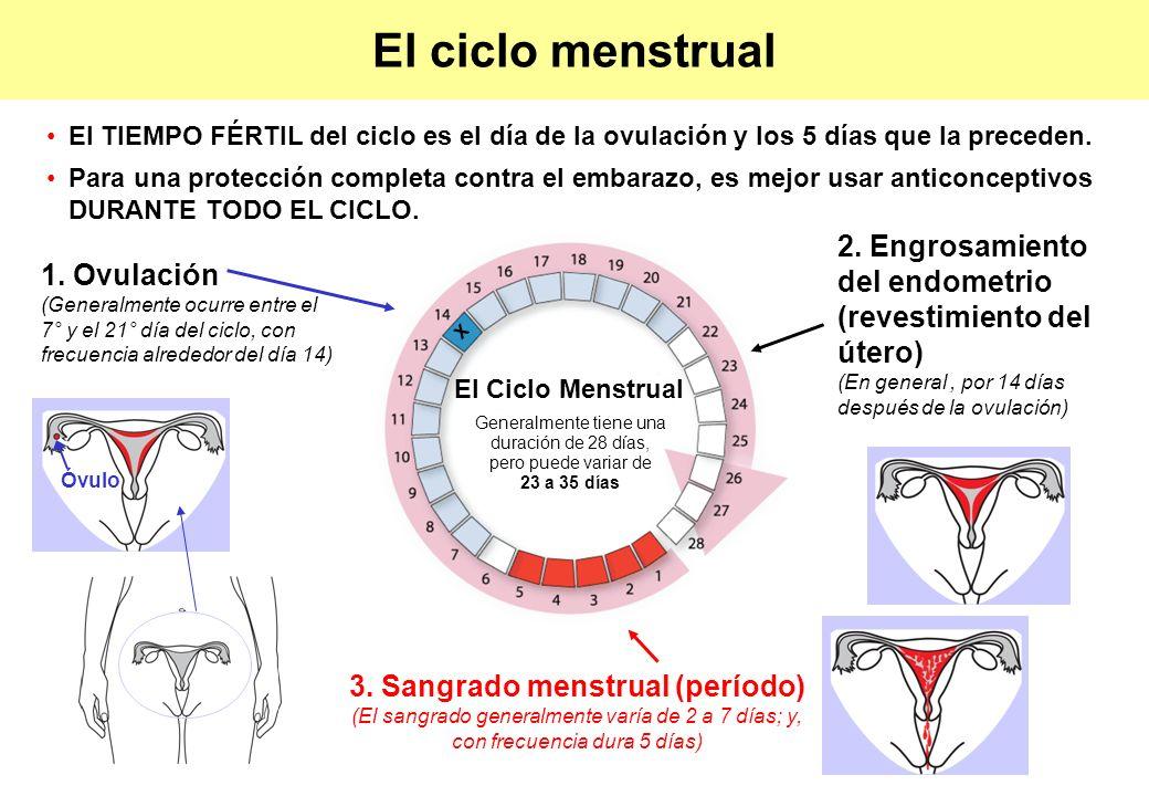 El ciclo menstrual El TIEMPO FÉRTIL del ciclo es el día de la ovulación y los 5 días que la preceden.