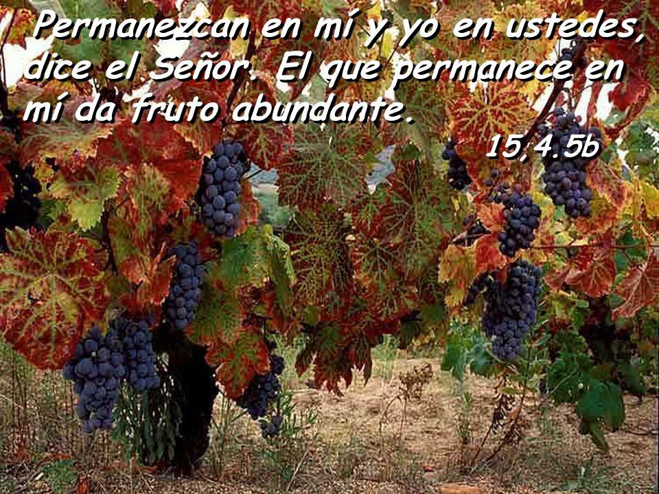 Permanezcan en mí y yo en ustedes, dice el Señor
