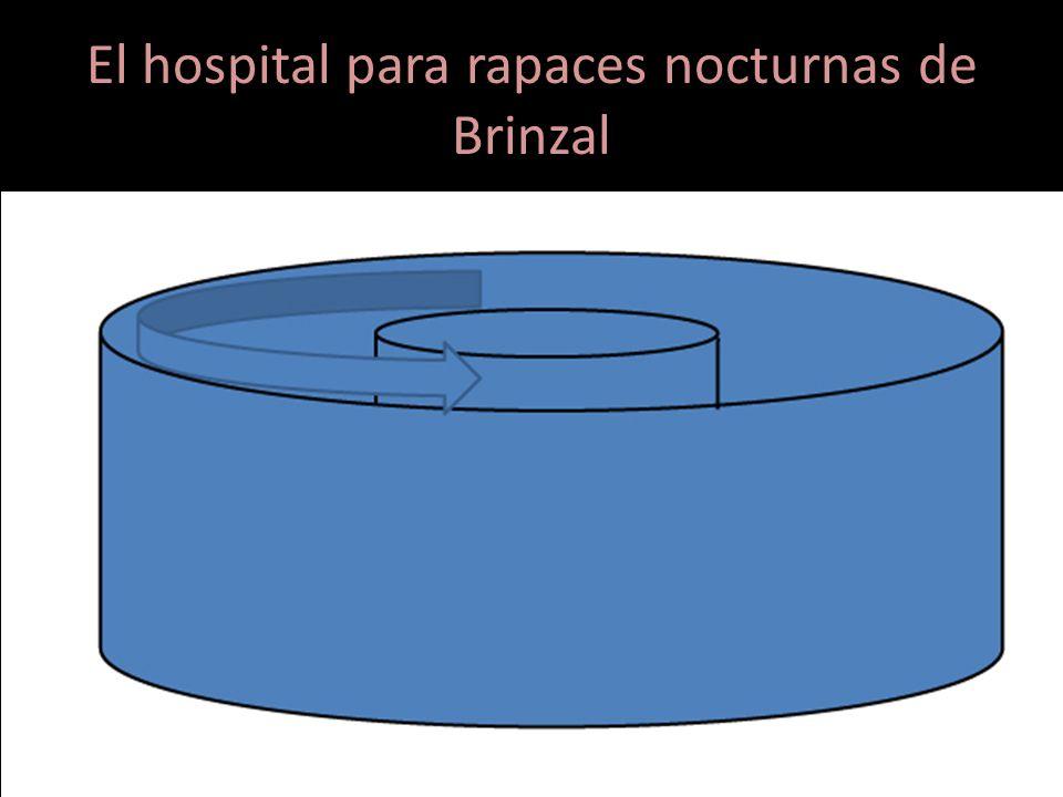 El hospital para rapaces nocturnas de Brinzal