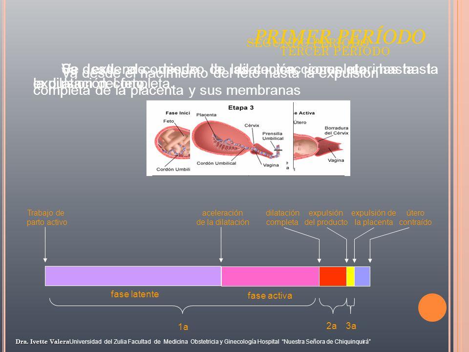 PRIMER PERÍODO SEGUNDO PERÍODO. TERCER PERÍODO. Va desde el nacimiento del feto hasta la expulsion completa de la placenta y sus membranas.