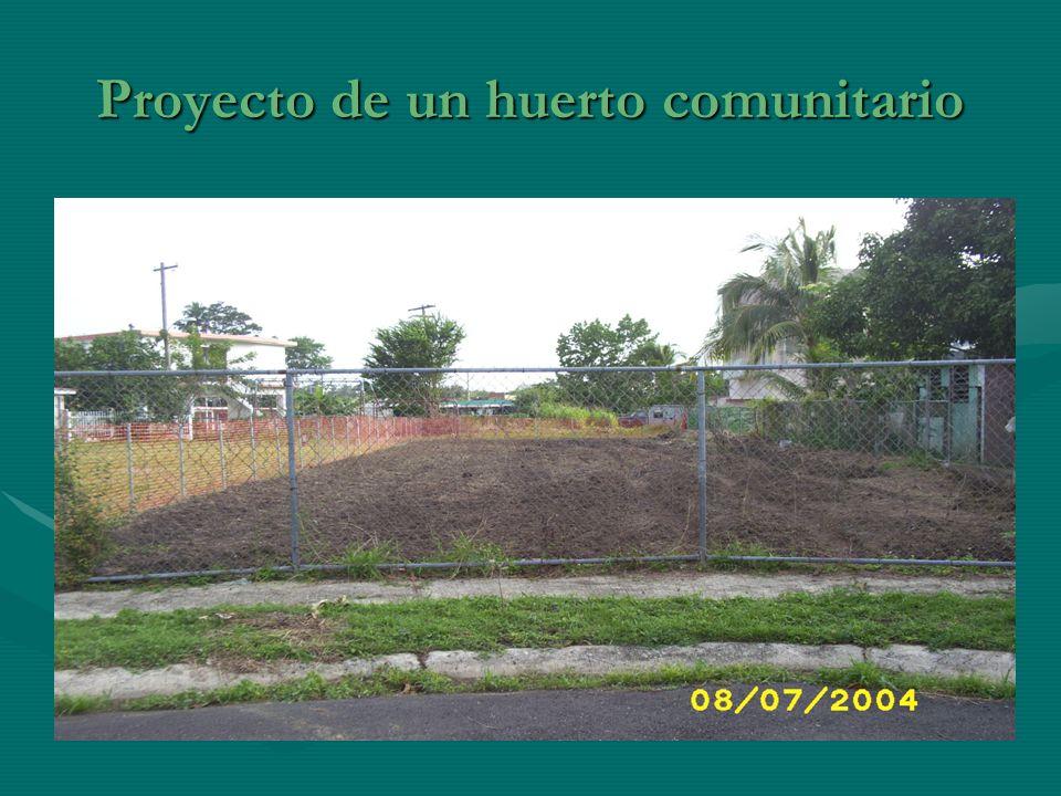 Proyecto de un huerto comunitario