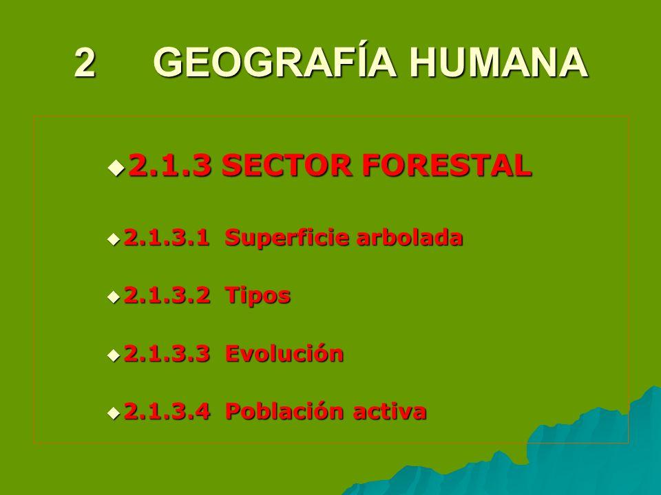 2 GEOGRAFÍA HUMANA 2.1.3 SECTOR FORESTAL 2.1.3.1 Superficie arbolada