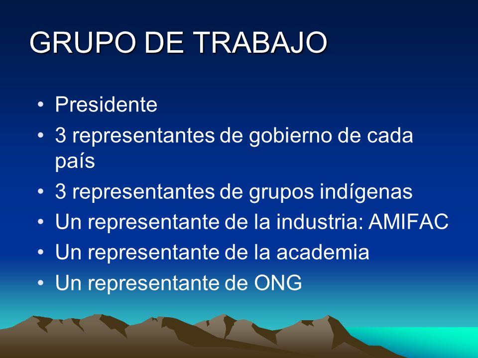GRUPO DE TRABAJO Presidente 3 representantes de gobierno de cada país