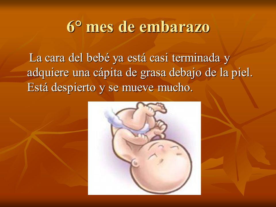 6° mes de embarazo La cara del bebé ya está casi terminada y adquiere una cápita de grasa debajo de la piel.