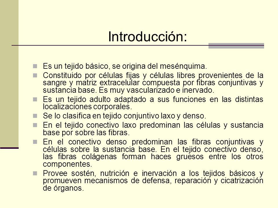 Introducción: Es un tejido básico, se origina del mesénquima.