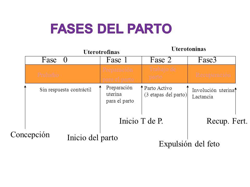 fases del parto Fase 0 Fase 1 Fase 2 Fase3 Inicio T de P. Recup. Fert.