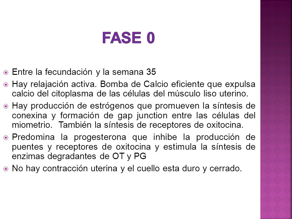 Fase 0 Entre la fecundación y la semana 35