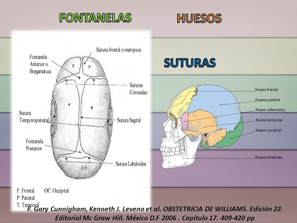 FONTANELAS HUESOS SUTURAS