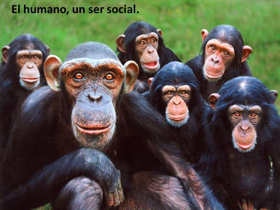 El humano, un ser social.