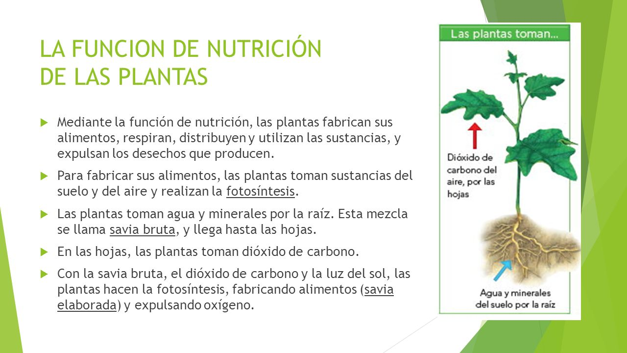 Naturales 4 ppt video online descargar for Funcion de las plantas ornamentales