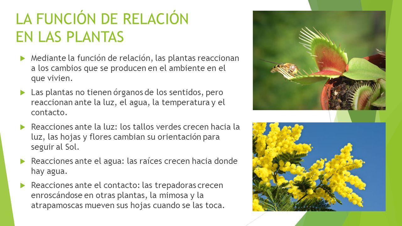 Ante qu reaccionan las plantas deepthroaters for Funcion de las plantas ornamentales