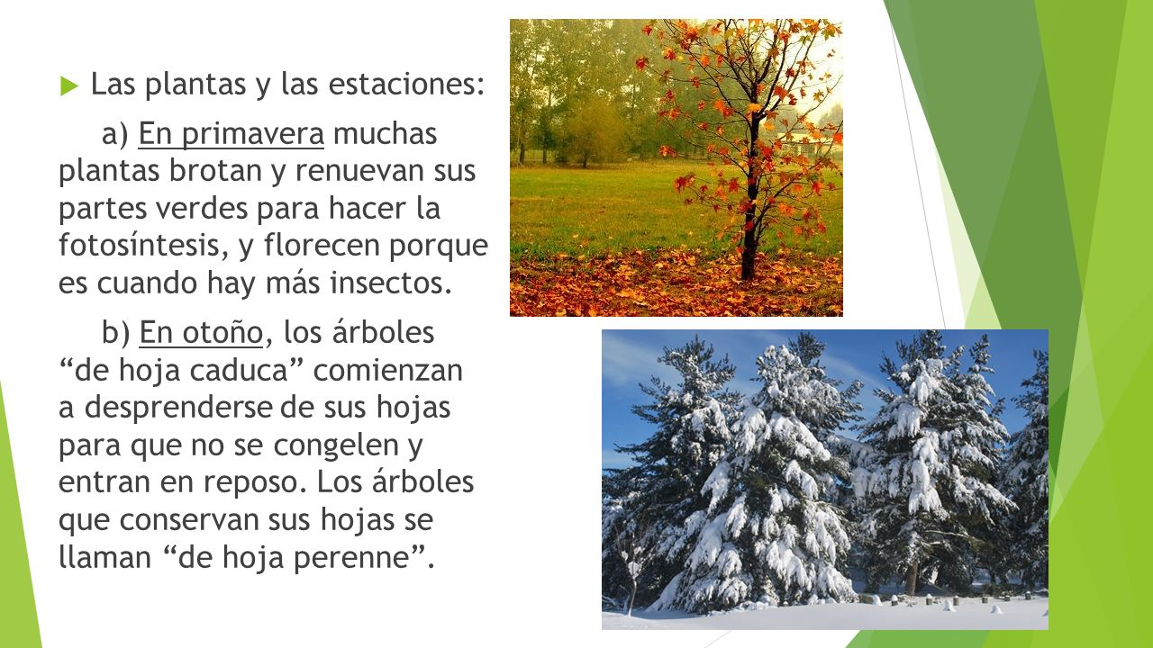 Naturales 4 ppt video online descargar for Arboles de hoja caduca y perenne infantil
