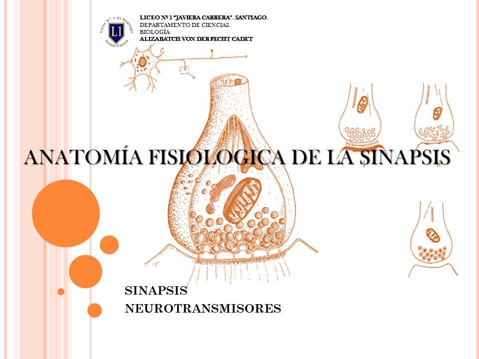 ANATOMÍA FISIOLOGICA DE LA SINAPSIS - ppt video online descargar