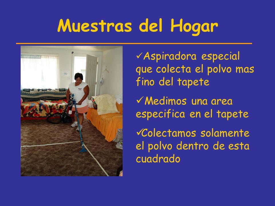Muestras del Hogar Medimos una area especifica en el tapete