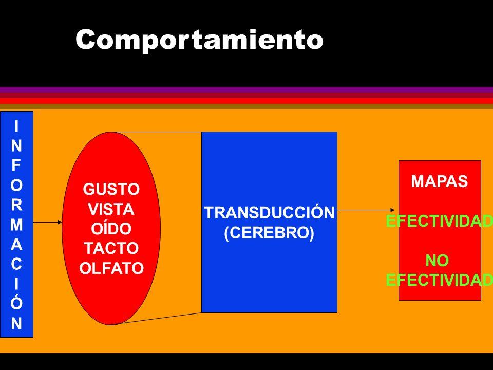 Comportamiento I N F O R GUSTO M VISTA TRANSDUCCIÓN MAPAS A OÍDO