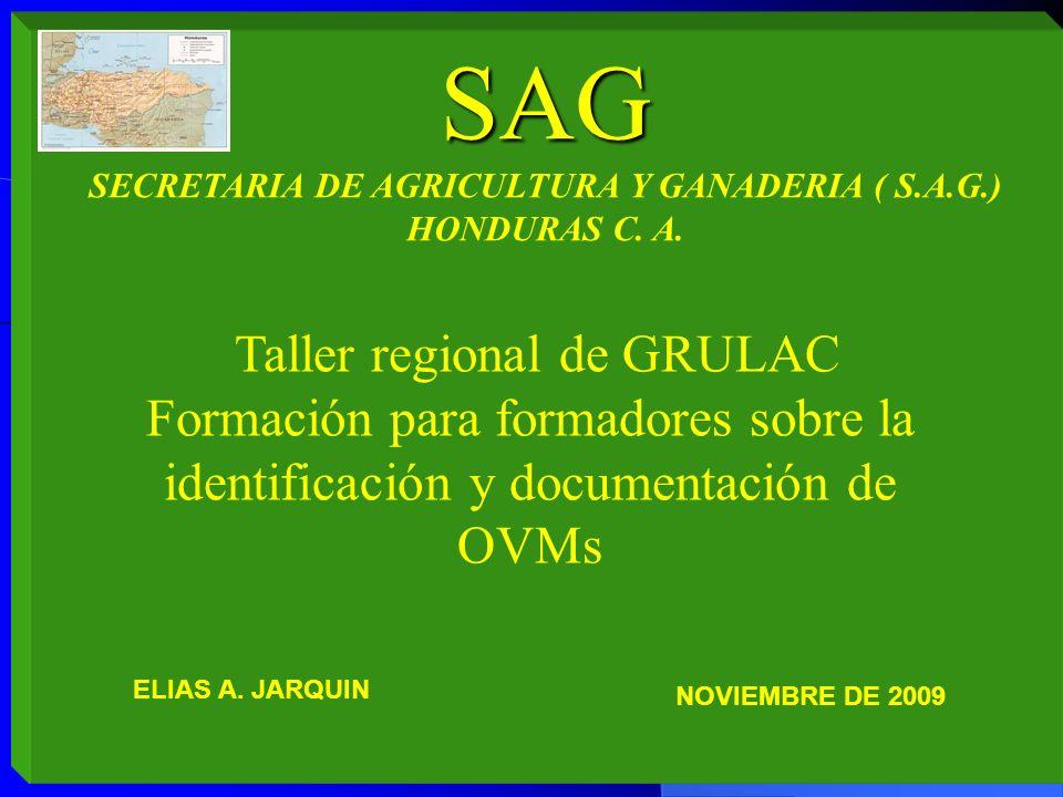 SECRETARIA DE AGRICULTURA Y GANADERIA ( S.A.G.)