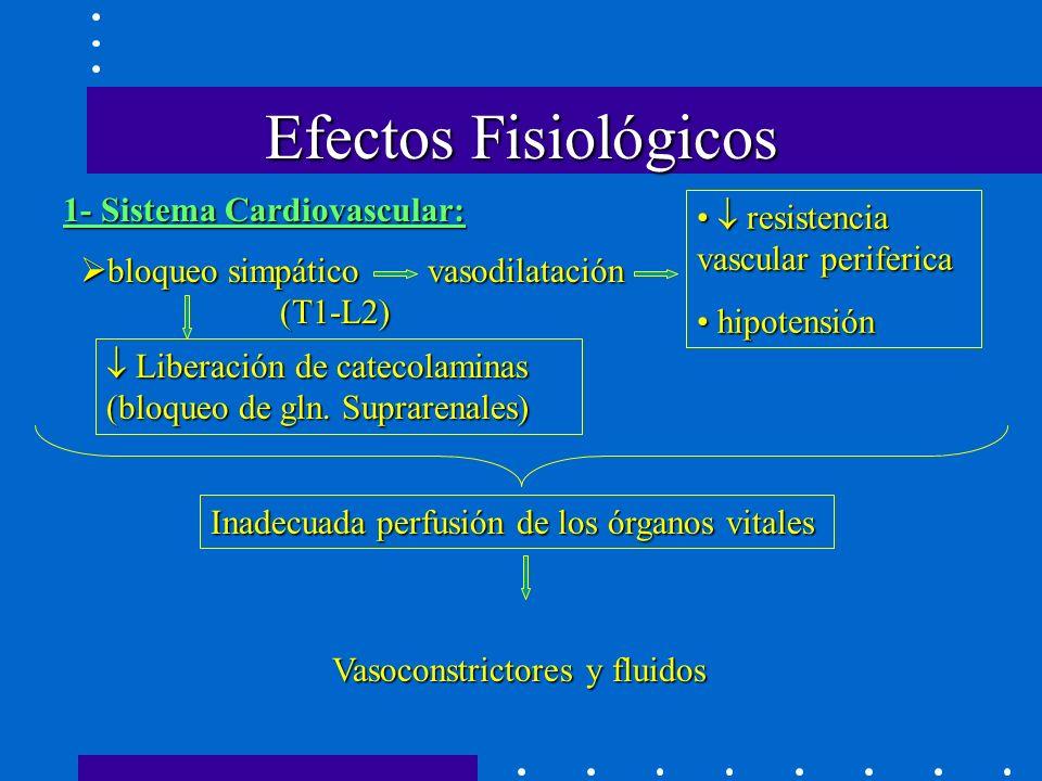 Efectos Fisiológicos 1- Sistema Cardiovascular: