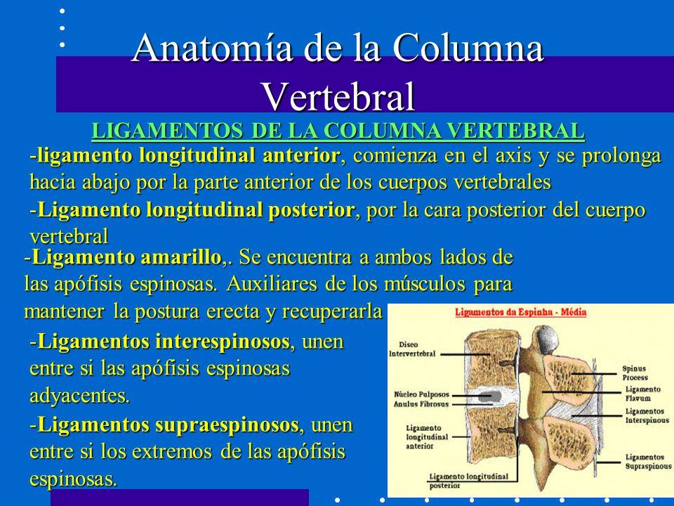 Famoso Puerta De La Anatomía De Bloqueo Ilustración - Anatomía de ...