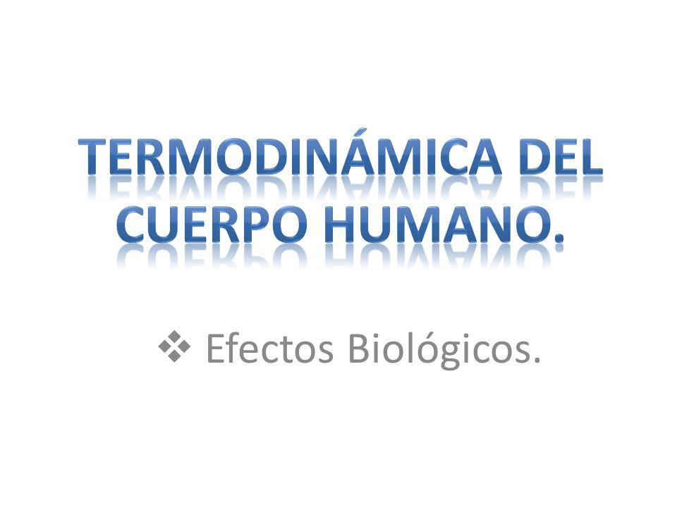Termodinámica del cuerpo humano.