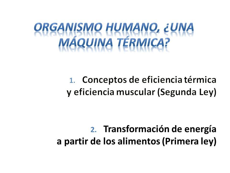 Organismo humano, ¿una máquina térmica