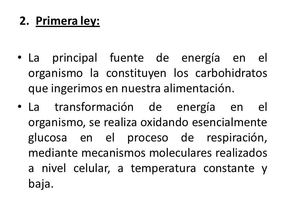 Primera ley: La principal fuente de energía en el organismo la constituyen los carbohidratos que ingerimos en nuestra alimentación.